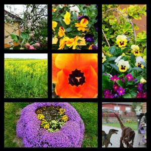 Gotta love Spring / Obožujem pomlad
