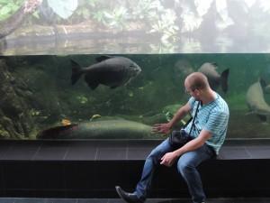 Huge fish. / Noro velike ribe.