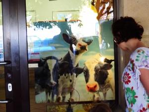 Paula really liked this realistic painting of cows. / Pauli je bila resnično všeč ta slika krav.